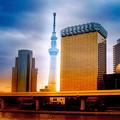 写真: 東京スカイツリー♪
