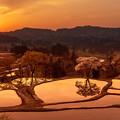 写真: 夕日に映える棚田