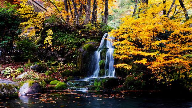 写真: ~里山の秋~