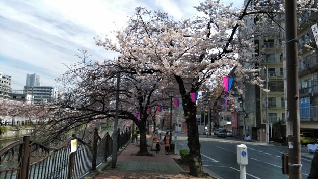 写真: 桜2018