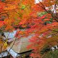 鳥居本の紅葉