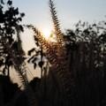 Photos: 暖暖的夕阳照在我的身上