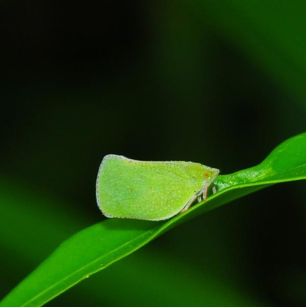 butterfly...???