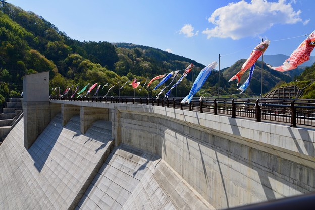 浅川ダムに鯉のぼり