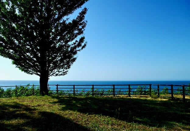 海の見えるイチョウの丘