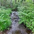 湿原の小川