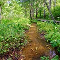 写真: 水芭蕉の小川
