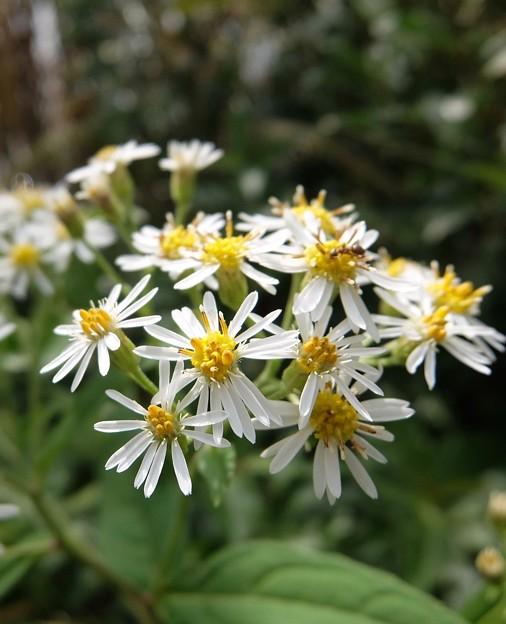 実りの秋の花