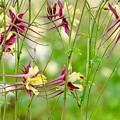 写真: お花のグッピー