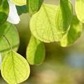 写真: 葉っぱの暖簾