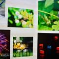 写真: bo -raさん、かわしょうさん、肥後の風太郎さん、jyuizさん、kimamaさん、みちのく三流写真家さん、ご協力ありがとうございました