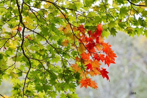 すこし、秋色