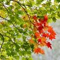 写真: すこし、秋色