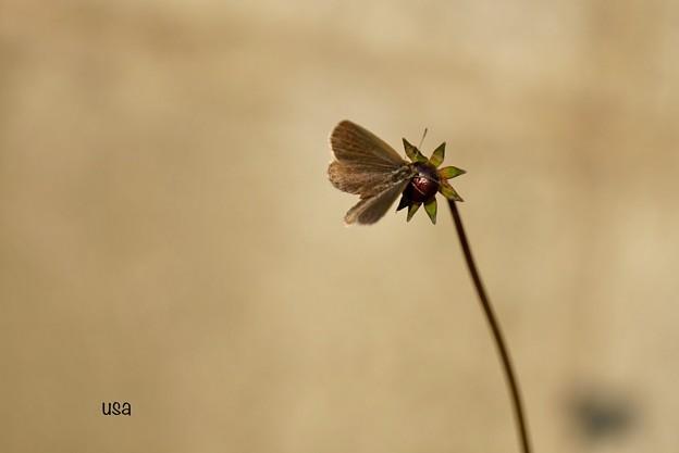 私が花を咲かせて魅せましょう