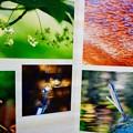 写真: natureさん、トキゾウさん、Guy Albatrossさん、みちのく三流写真家さん、bo-raさん、ご協力ありがとうございます!!