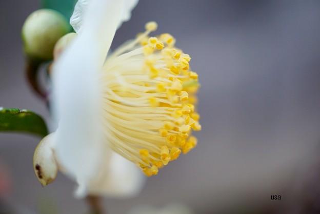 Photos: モヤシの栽培始めました~