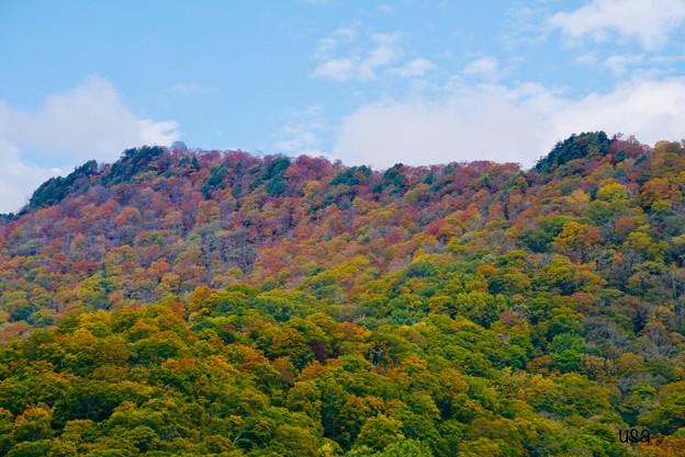 赤色、緑色、黄緑色、橙色、黄色、山吹色、秋色