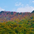 写真: 赤色、緑色、黄緑色、橙色、黄色、山吹色、秋色