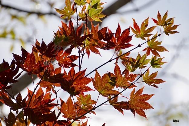 Photos: 空を見上げれば、秋