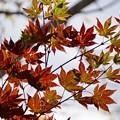 写真: 空を見上げれば、秋
