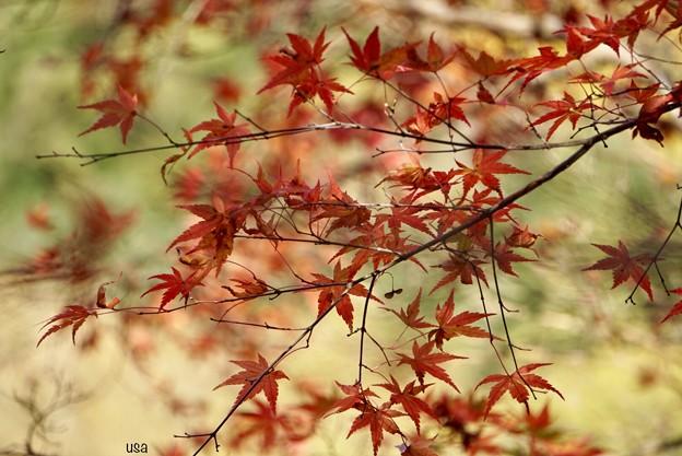 2つ葉のクローバー