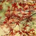 写真: 2つ葉のクローバー
