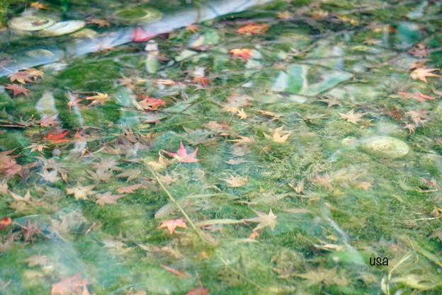 紅葉色に染まる池
