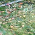 写真: 紅葉色に染まる池