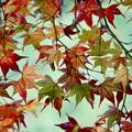 写真: 優しい秋の陽射しに照らされて