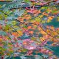 写真: 秋の色彩