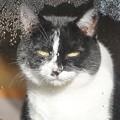 Photos: 猫の涙