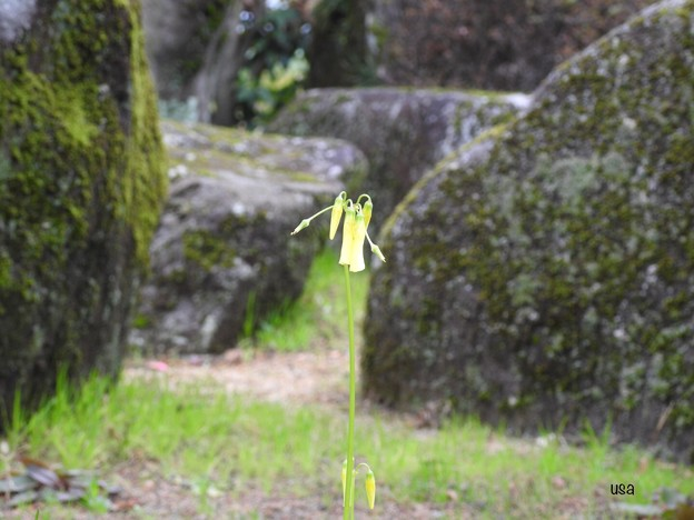 写真: 同化されず凛と咲く花