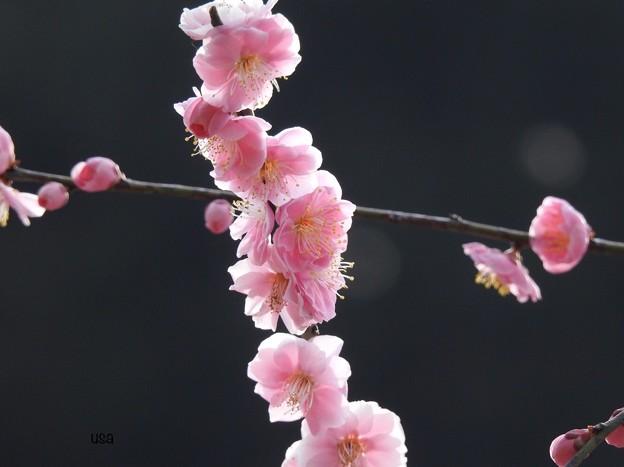 かんざしをさして、春をよぶ