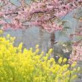 春が来たよ!