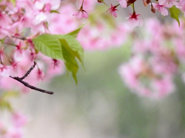 桜色の便箋