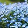 Photos: 青い瞳