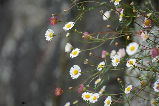 Photos: あなたが好きなお花