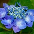 Photos: 花たまご