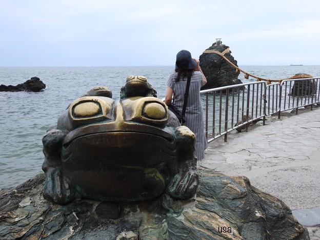 蛙に気付かず、、、