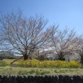 Photos: 東豊田公園