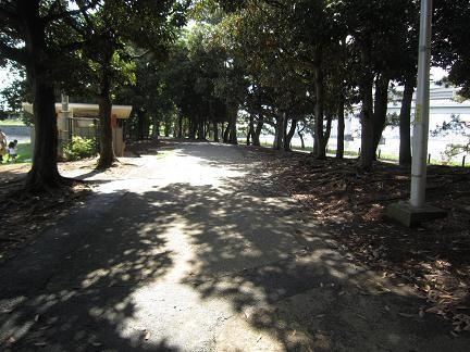 お台場公園に至る道