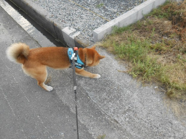 写真: ビビちゃんって呼ばれるようになりました~!