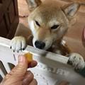 Photos: あんたはええね~!