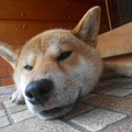 Photos: 今日も涼しくてええわい!