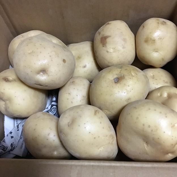 立派なジャガイモ