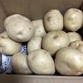 Photos: 立派なジャガイモ