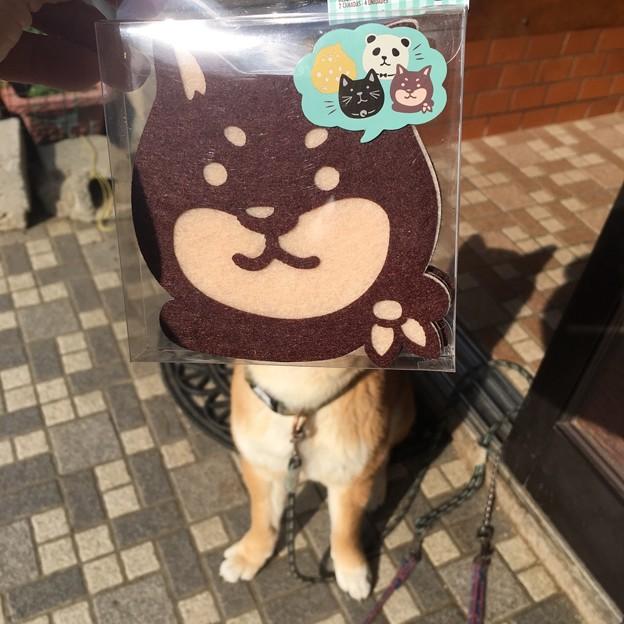 Photos: 黒柴ぽくなれる・・・