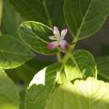 写真: 紫陽花??