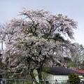 Photos: 写真00122 R46から県道に入ったところの桜