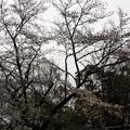 Photos: 写真00180